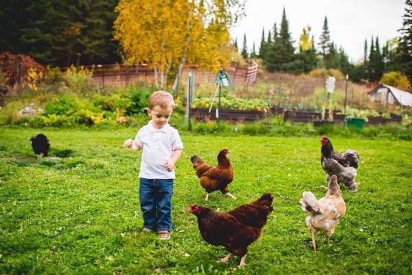 Bentley with chickens